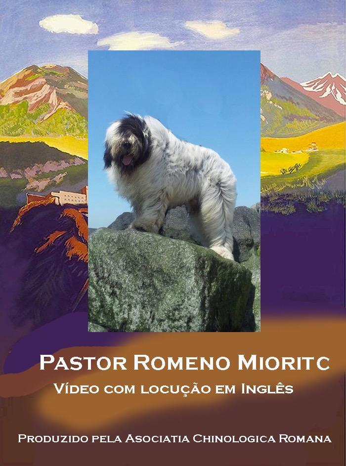 Artigo Cão Pastor Mioritic (Ciobanesc Romanesc Mioritic FCI #349) - 2020-04-22