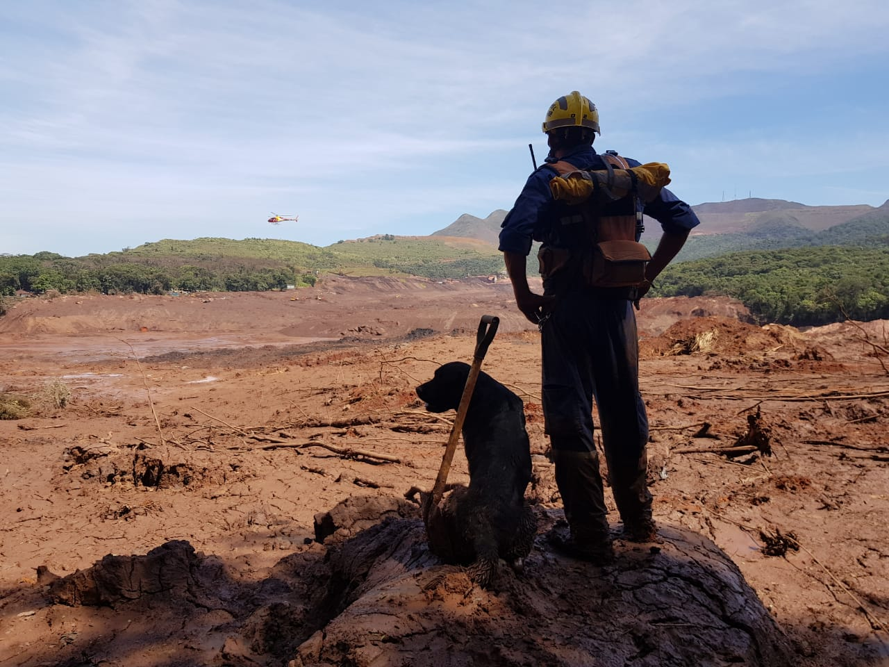 Artigo Em Santa Catarina, cães auxiliam corpo de Bombeiros em missões - 2019-04-02